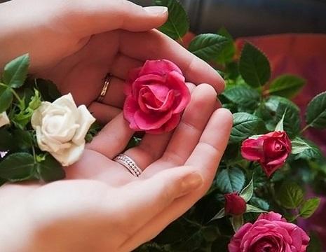 دانلود آهنگ نازکی مثل گل از شاهرخ
