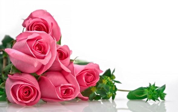 ژینا گل من با صدای شادمهر عقیلی