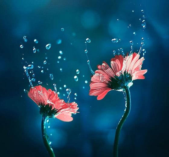 دانلود آهنگ هایده به نام تنها با گلها گویم غمها را
